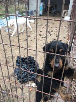 Kırklareli'de Köpeklerin Kötü Şartlarda Kaldığı Barınak Yıkıldı