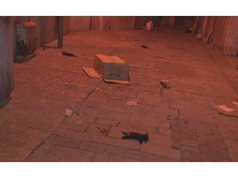 Yavru Kediler Ölü Bulundu
