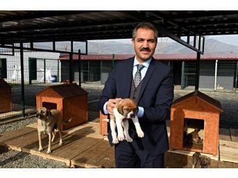 Turhal'da Hayvan Ambulansı Hizmete Giriyor