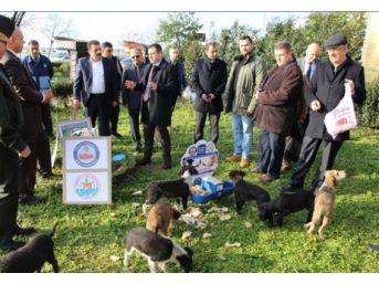 Yalova Armutlu'da Sokak Hayvanları Unutulmadı