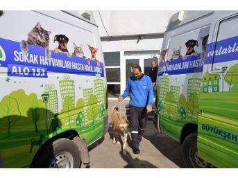 Sokak Hayvanları Büyükşehirin Koruması Altında