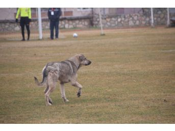Bu Köpek Her Hafta Sahada
