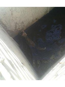 Sulama Havuzunda Boğulmak Üzere Olan Tilkiyi İtfaiye Kurtardı
