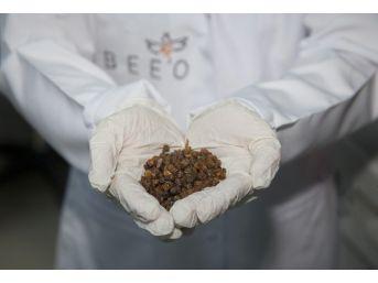 Arı Ekmeği, Doğal Vitamin Ve Mineral Kaynağı