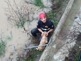 Dereye Düşen Köpeği İtfaiye Ekipleri Kurtardı