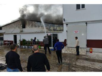 Fide Üretim Tesisinde Yangın