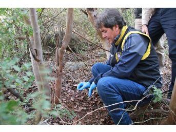 Ormanlık Alanda İnsana Ait Olduğu Tahmin Edilen Kemik Bulundu