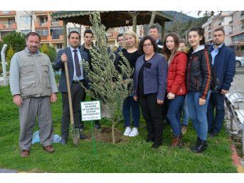 Söke'de Afrin Şehitlerinin Anısına Zeytin Fidanı Dikildi