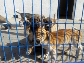 Hayvanlara Şiddet Uygulayanlara 674 Bin Lira Ceza
