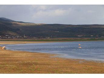 Marmara Gölünün Suyu Çekildi Balıkçıl Kuşlarının Sayısı Arttı