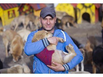Çocuğu Gibi Gördüğü 750 Sokak Köpeğine Tek Başına Bakıyor