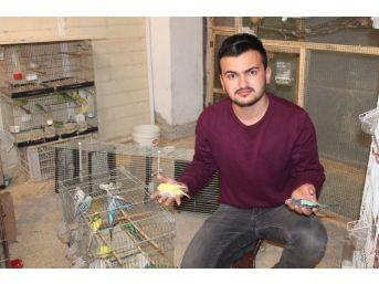 Şüpheli İntikamını Muhabbet Kuşları Üzerinden Aldı