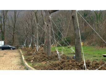 Maçka Parkı'ndan Ağaç Taşıma İşlemi Sona Erdi