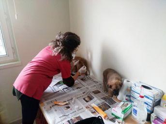 Kastamonu'da Çaya Düşen Köpek, İtfaiye Ekiplerince Kurtarıldı