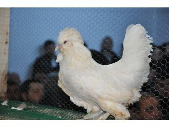 Simav'da İlk Kanatlı Hayvan Mezatı