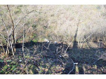 Ordu'da Pikap Fındık Bahçesine Yuvarlandı: 4 Yaralı