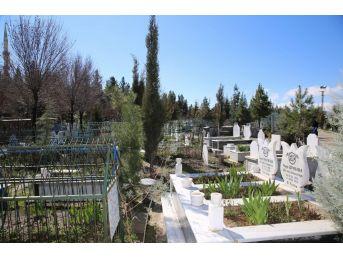 Siirt'te Mezar Sahiplerine Fidan Dağıtıldı