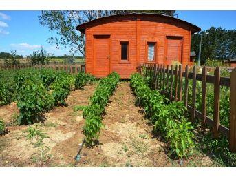 Hobi Bahçeleri İçin Kura Çekimi Yapılacak