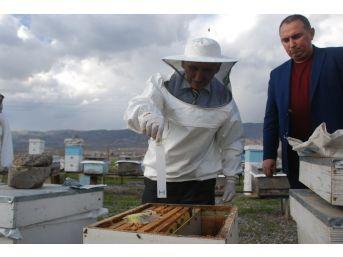 Arı Kenesi İle Mücadelede 40 Bin Kovan İlaçlanacak
