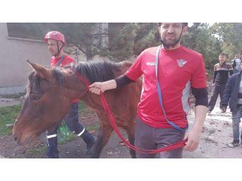 Sığınak Kuyusuna Düşen At Kurtarıldı