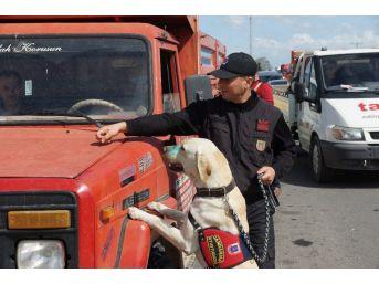 Aydın'da Nevruz Operasyonu