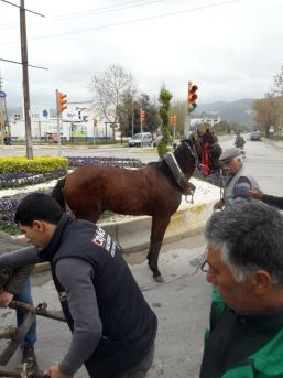 Atın Özgürlük Mücadelesi Böyle Bitti