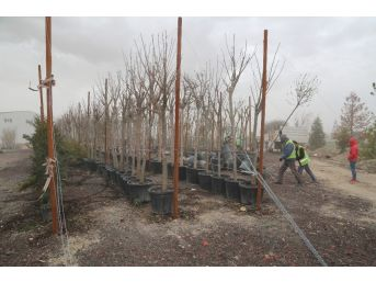 Niğde Belediyesinden Ağaçlandırma Çalışması