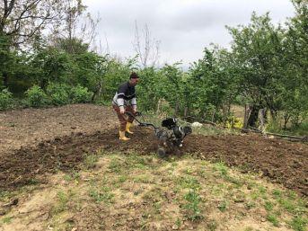 Alaplı'da Bağ Bahçe Çalışmaları Hız Kazandı