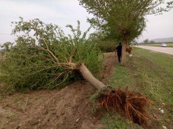 Fırtına Adana'da Ağaçları Kökünden Söktü