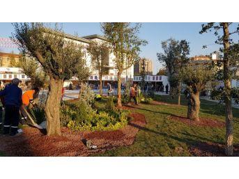 Zeytinburnu 15 Temmuz Meydanı Dikey Bahçeyle Yeşilleniyor
