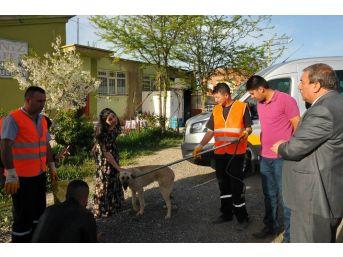 Akşehir Belediyesi Silahla Vurulan Köpeğin Tedavisini Yaptırdı