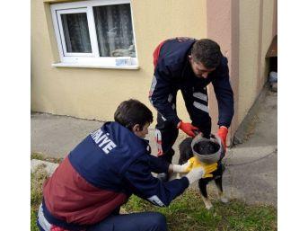 Başı Bidona Sıkışan Yavru Köpeğin Yardımına İtfaiye Yetişti