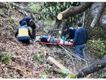 Kestiği Ağaç Üzerine Düştü