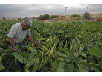 Ankara Büyükşehir Belediyesinin Sebze Fidesi Ve Salatalık Tohumu Desteği 14 Mayıs'ta Başlıyor