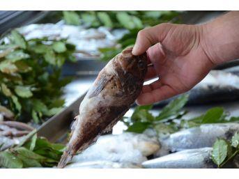 Dışı Zehirli, İçi Lezzetli Balık: İskorpit
