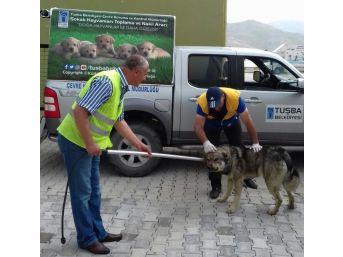 Tuşba'da Sokak Hayvanları İçin Çalışma
