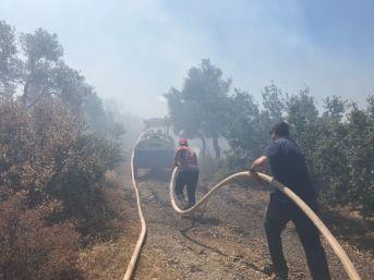 Milas'ta Zeytinlik Alanda Yangın Çıktı