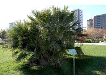 Konuşan Ağaçlar Projesi Teknoloji Çevreyle Buluşturuyor