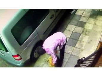 Kadıköy'de Köpeğe Şiddet Kamerada