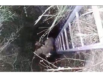 Kör Kuyuda Köpek Kurtarma Operasyonu