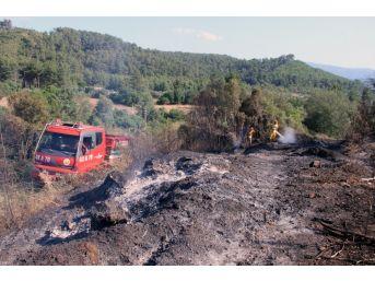 Ula'da 2 Hektar Alan Yandı