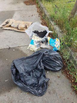 Sakarya'da 5 Yavru Köpek Zehirlenerek Öldürüldüğü İddiası