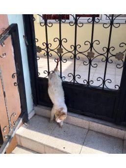 Demir Kapıya Sıkışan Kediyi İtfaiye Kurtardı