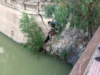 Nehre Düşen Yavru Köpek Kurtarıldı