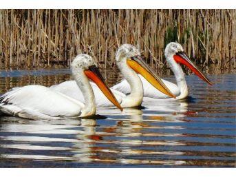 Türkiye'nin Botanik Bahçesi Dilek Yarımadası Yeni Ziyaretçilerini Bekliyor