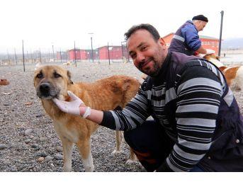 Bingöl Belediyesi Hayvan Bakımevi, Onların Evi Oldu