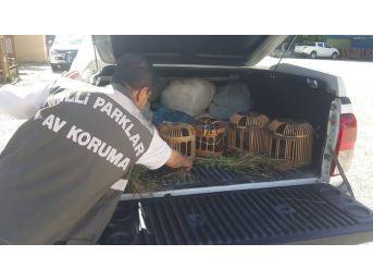 Van'ın Gevaş İlçesinde Keklik Avcılarına Ceza