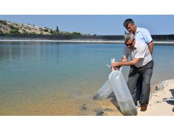 Su Kaynaklarının Balıklandırılması Projesi