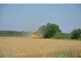 Doğunun Çukurova'sında Buğday Hasadı Başladı