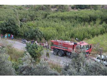 Mersin'de Zeytinlik Ve Ormanlık Alanda Yangın